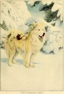 Read more about the article NORTH GREENLAND ESKIMO DOG – Information About Dogs