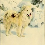 NORTH GREENLAND ESKIMO DOG – Information About Dogs