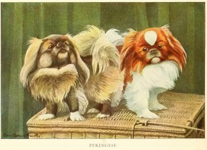 Read more about the article PEKINGESE DOG – Information About Dogs