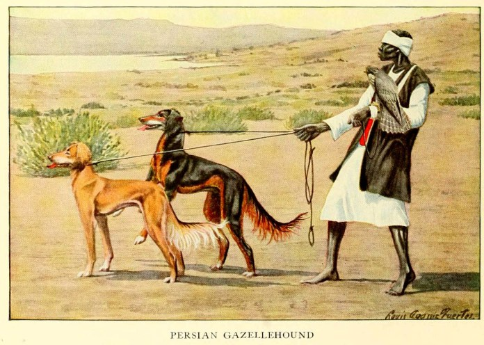persian gazellehound dog - information about dogs