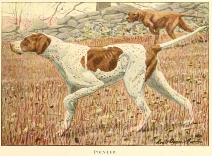 pointer dog - information about dogs