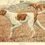 Pointer Dog Breeds – Information About Dogs