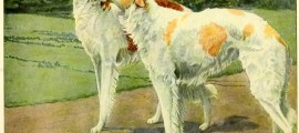 Borzoi Dog – Russian Wolfhound – Information About Dogs