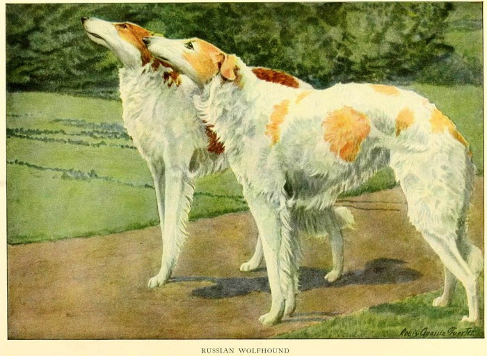 russian wolfhound - information about dogs