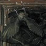 CHIMNEY SWIFT – Birds for Kids