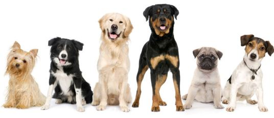 4386187-picture-of-dogs