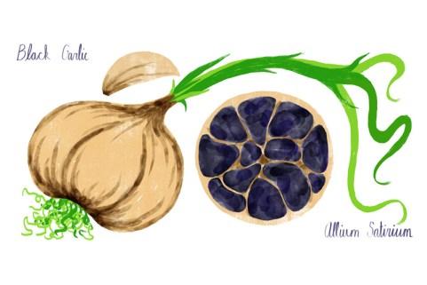 Black-Garlic-stillthumb