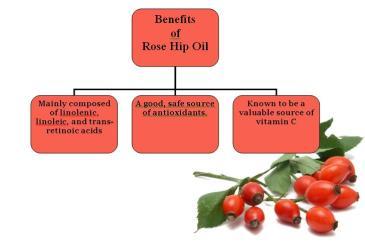 rose-hip-benefits