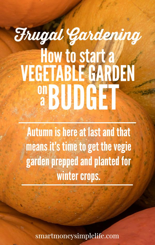 frugal gardening - start a vegetable garden