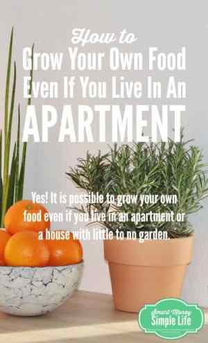 grow your own food in an apartment