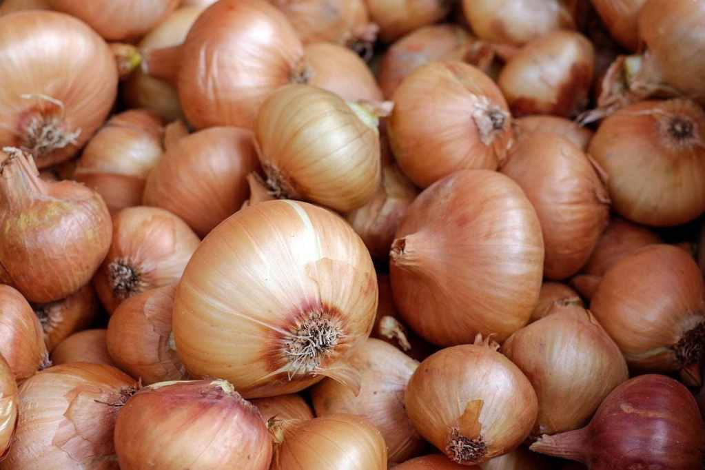 PTI Government Ban on Onion Export