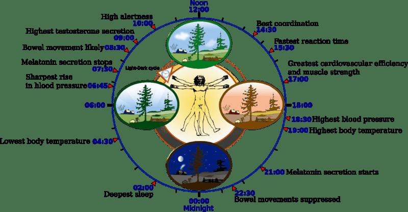 Sleep and Circadian Rhythms