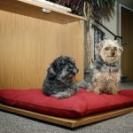 Murphy Bed Pet Bed
