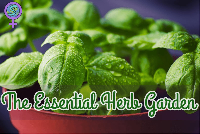The Essential Herb Garden