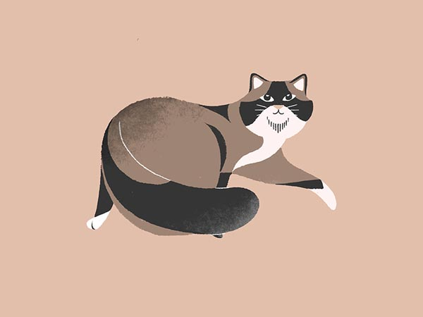 Cat-Illustration-10