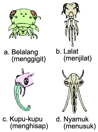 Berbagi Pengetahuan Insecta