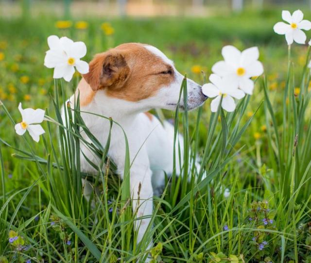 Ditch The Itch Skin Allergies In Dogs