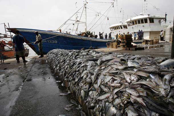漁業過度捕撈下的生態失衡 | 海洋生物資源永續發展課程