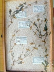 Dried Plants 2