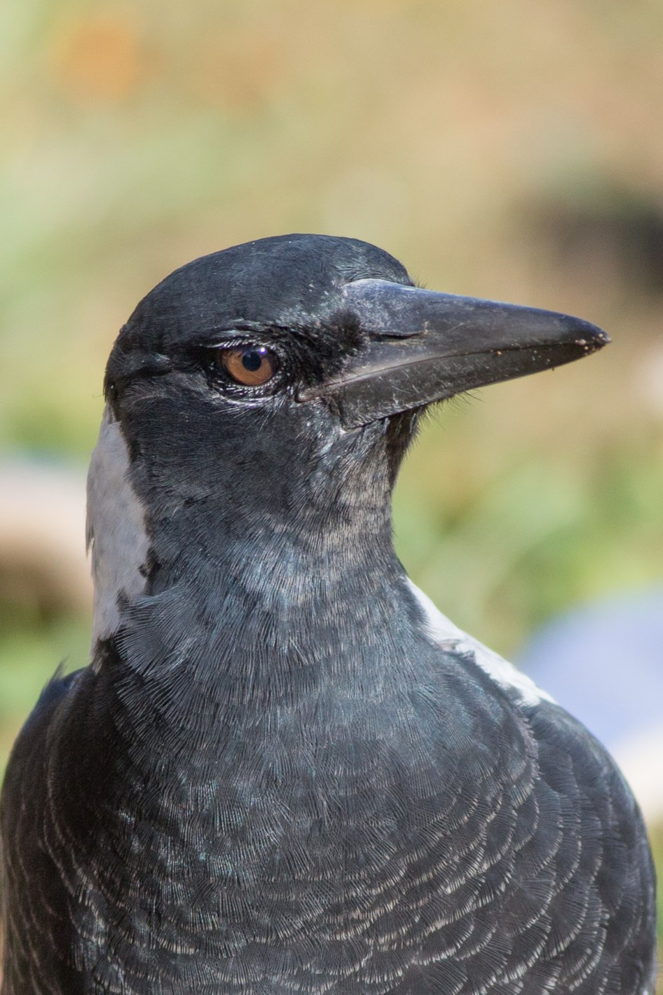 20170305_084515_birds_146a3618