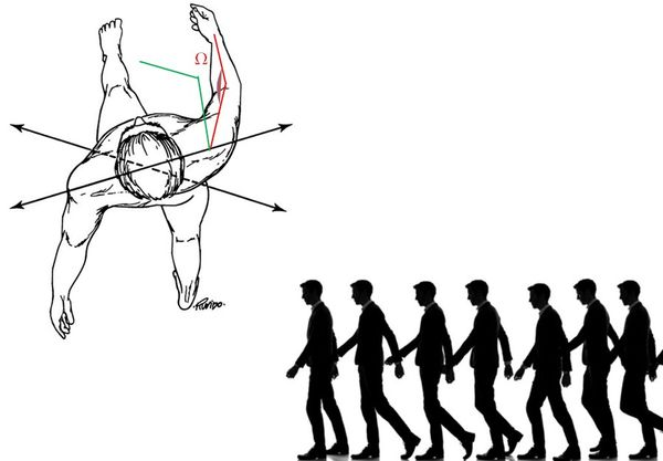 A study of the human gait cycle in order to design a biped
