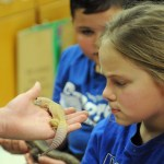 A Pawnee Elementary student looks closely at the gecko presented to her. Photo by Katherine McGinness