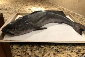Whole Sablefish (black cod)