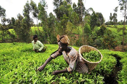 African Farmers will be Getting $1M Fertilizer Grant to Boost Crop Production