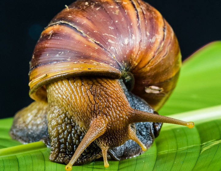 Quick Guide to Starting a Lucrative Snail Farming Business in Nigeria