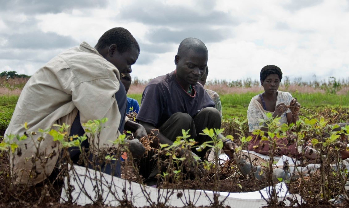 Agrostrides 30 Nomination Opens for Young African Agric Entrepreneurs