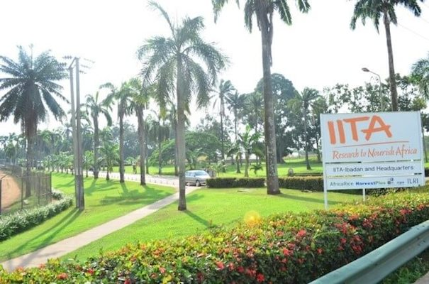 IITA Becomes First Nigerian Institution to Receive Africa Food Prize at AGRF, Rwanda