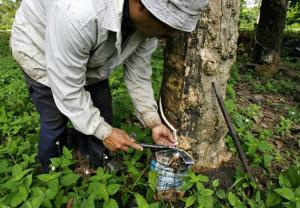 AIRIA urged to Crub Import Duty hike on Natural Rubber