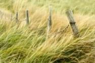 09 Fence Posts