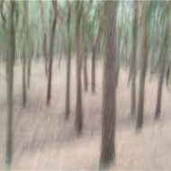 First-Icm Pinewood Impression-Alison J Fryer