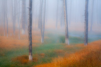 Forest Colours