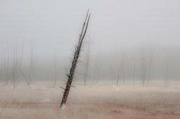 Precarious Tree