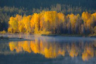 Reflected Gold