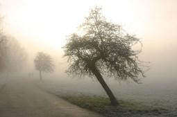 Winter Walk at Dawn