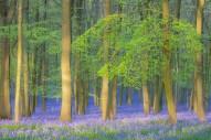 Wood in Spring