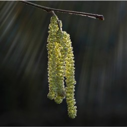 Commended-Catkins-Mike Edwards