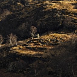 Third-Glen Nevis Hillside-Mike Edwards