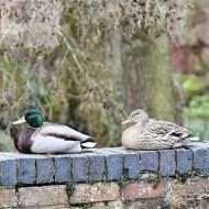 -Sitting Ducks-Mike Price