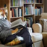 -Urban Fox in Isolation-Hilary Roberts FRPS MFIAP