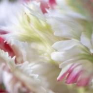 -Petals-Dinah Jayes