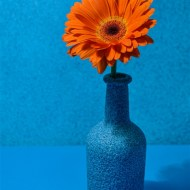 First Orange and Blue Frank Gresham