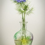 Highly Commended Love in a Mist Ballantyne-Smith Sheila
