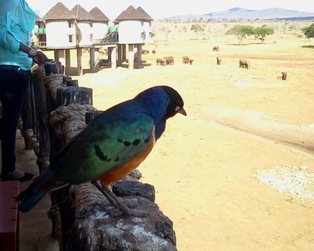 Uccelli di colori assurdi!