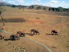 Veduta di elefanti dalla nostra camera