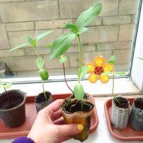 Kim's seedlings