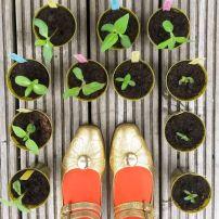 My seedlings 2